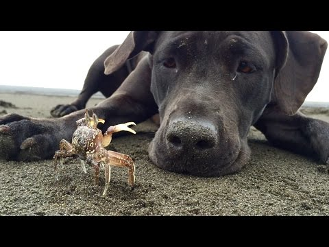 Sheila likes to dig out crabs and play with them