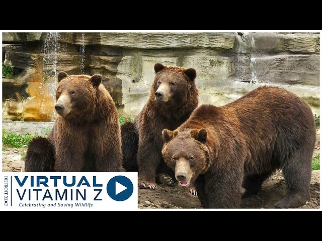 Virtual Vitamin Z | Join us at the Bear Den and meet Boo, Thor and Mike.
