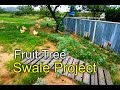 Rainwater swale for fruit trees - Desert Permaculture