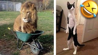 Funny Animals Acting Like Humans! LOLZ