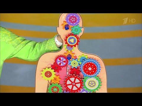 Питание при тиреотоксикозе щитовидной железы