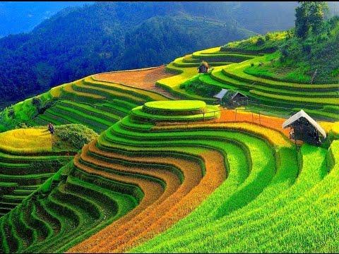 Wonderful Rice Terrace Fields in Mu Cang Chai - Vietnam