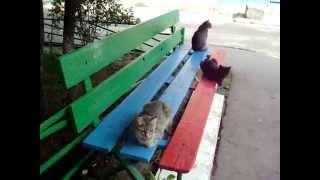 KSN Кошки на лавочке