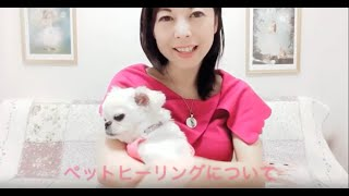 ペット(アニマル)ヒーリングについて説明しています。 ペットは、癒しと無条件に愛を与えてくれる、とても有り難い存在です。 まさに、私達...