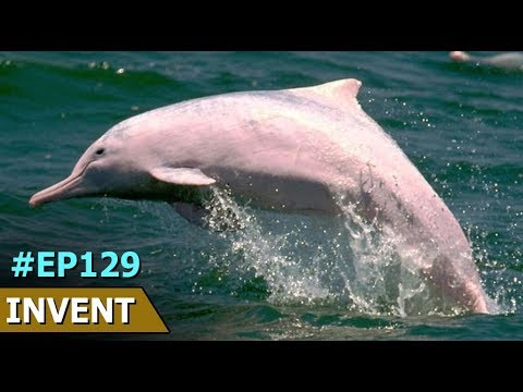 Yangtze River Dolphin In China | Invent Shortcuts | Episode 129