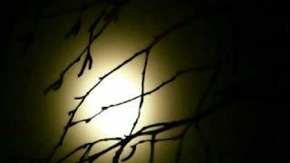 Beethoven: Moonlight Sonata arranged for String Quartet