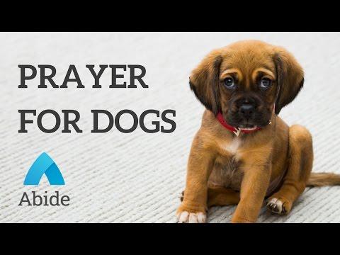 Christian Mediation: Prayer For Your Dog