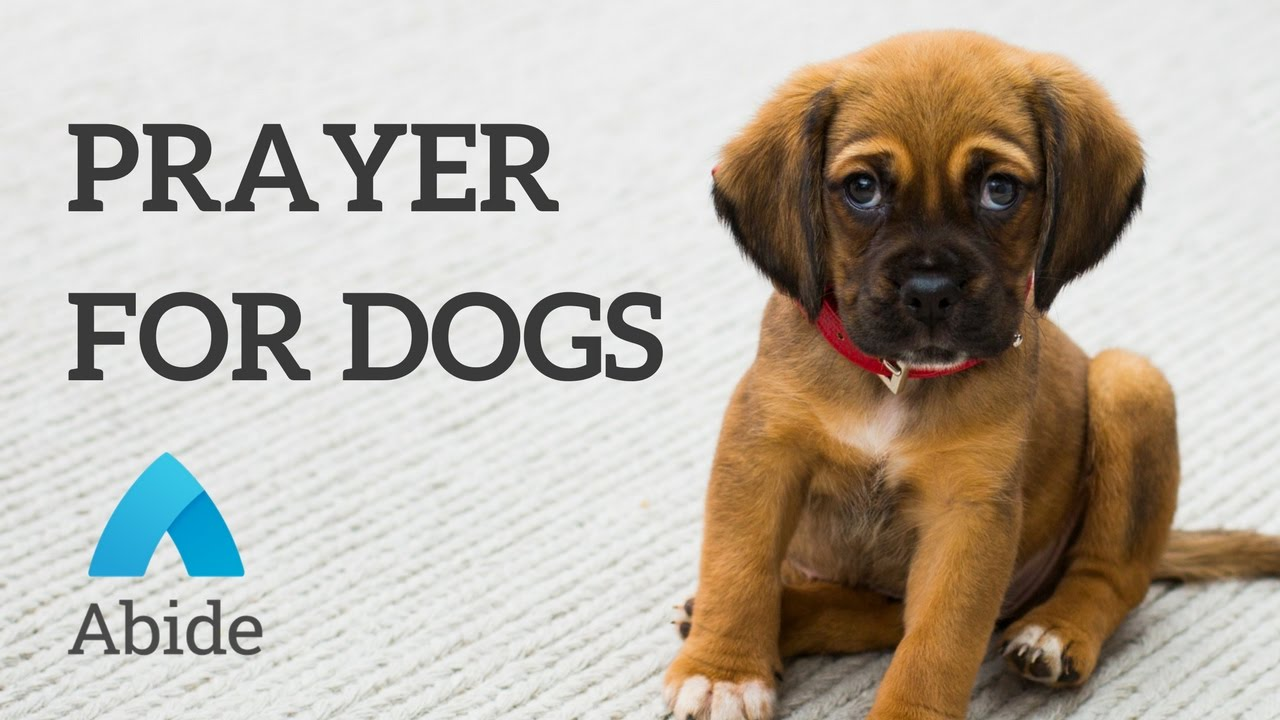 Christian Mediation: Prayer For Your Dog