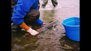 Монгольська фонд охорони навколишнього середовища і збереження