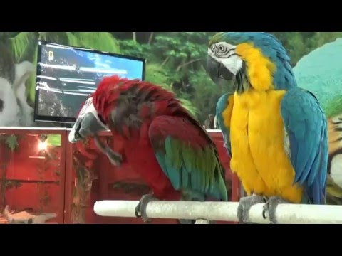 фото птицы попугаи