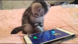 cat catching fish on tab | Whatsapp video| Funny Video