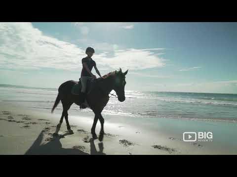 Equathon Horse Riding Adventures, Tour Operator in Sunshine Coast offering Horseback Riding Tour