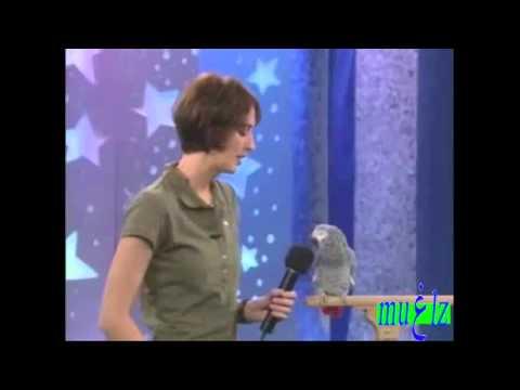 The best talking birds