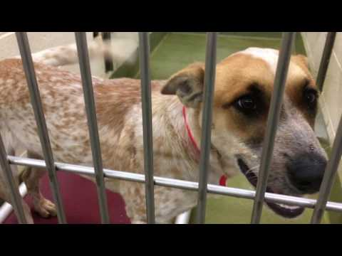 Moreno Valley Animal Shelter: Sweet Paws Pet Adoption Event