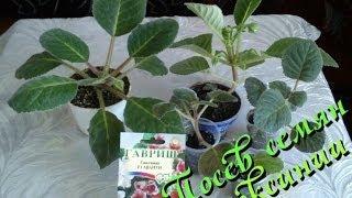 видео Семена тыквы необыкновенной: как купить на алиэкспресс