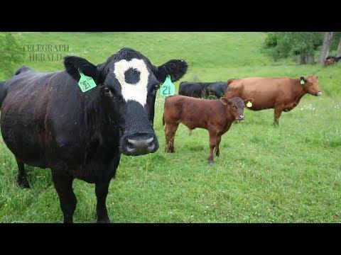 TH Farm Family: Miller