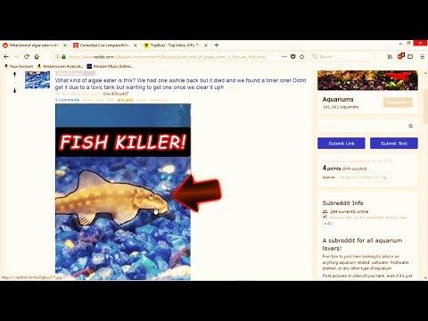 BAD FISH! THIS  FISH WILL KILL ALL YOUR FISH!