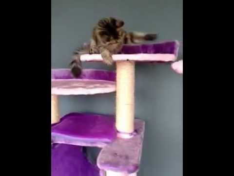 Rascador para gatos modelo youtube - Casas para gatos baratas ...