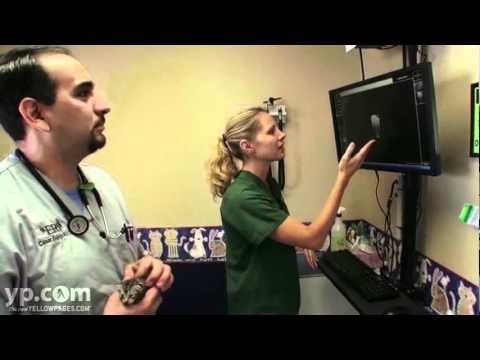 Veterinarians San Antonio TX Animal Emergency Room