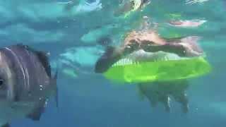 カリブ海に浮かぶコロンビア領のサン・アンドレス島。美しい海でのシュ...
