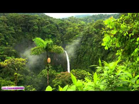 African Music  African Jungle  Relaxing Ambient Music