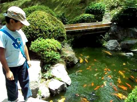 Jardin japones guadalajara jalisco youtube for Plantas para jardin japones