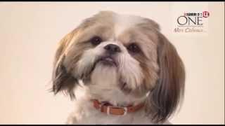 (2015) PURINA ONE (Моя собака) - Здоровый питомец сегодня и завтра