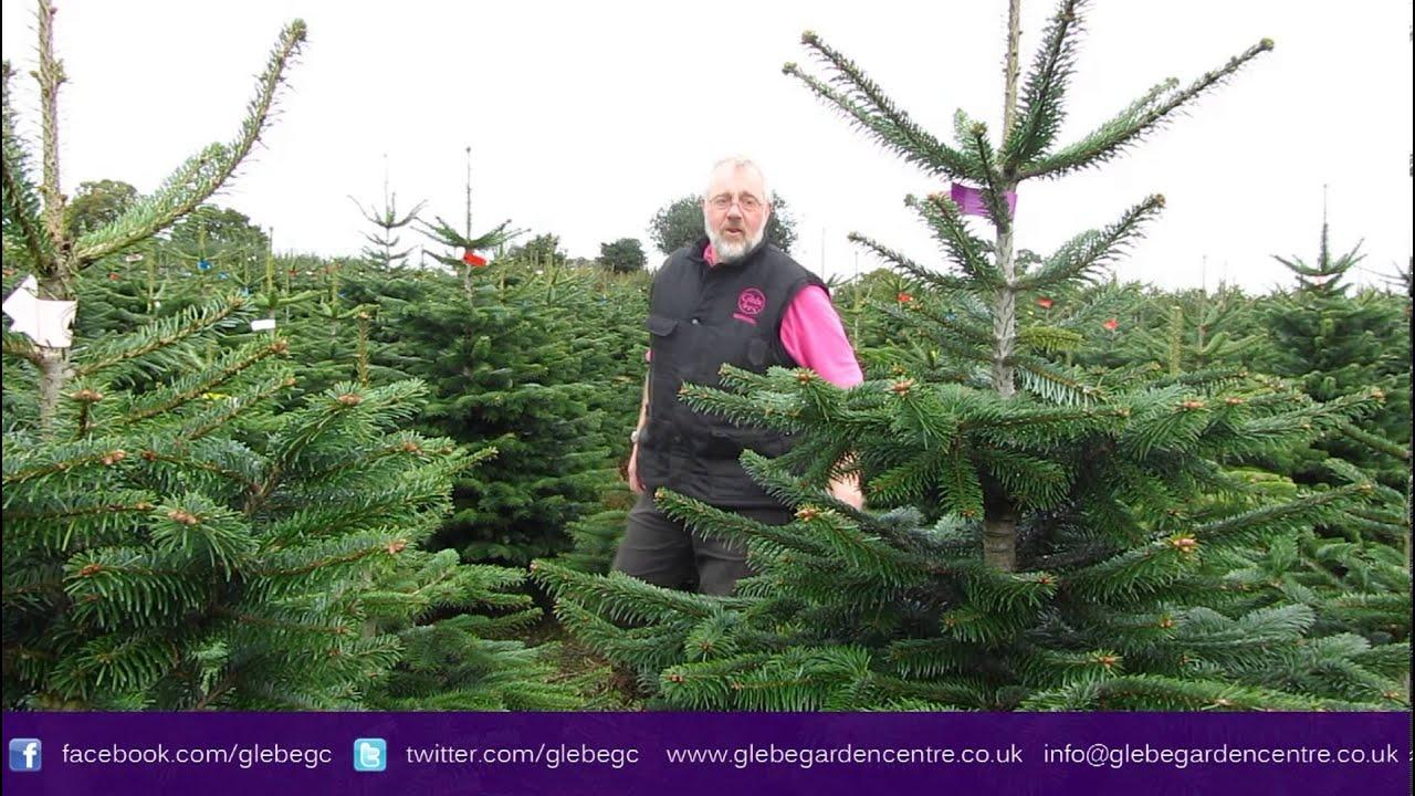 Real Christmas Trees Leicester | Glebe Garden Centre Leicester ...