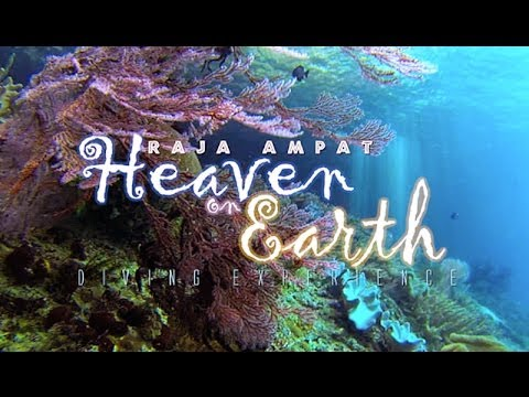 Raja Ampat Heaven on Earth - Diving Experience