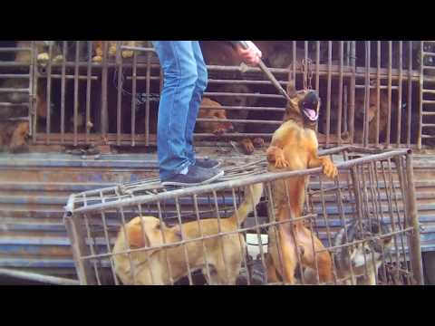 Support Proposed Legislation to Ban Dog and Cat Meat in China!