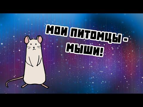 МОИ ПИТОМЦЫ - ДЕКОРАТИВНЫЕ МЫШИ!