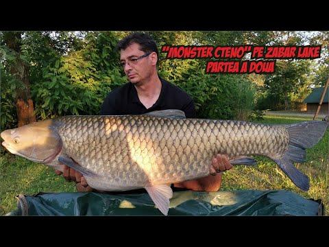 Download Pescuit pe Zabar Lake! Monster CTENO! Partea a doua