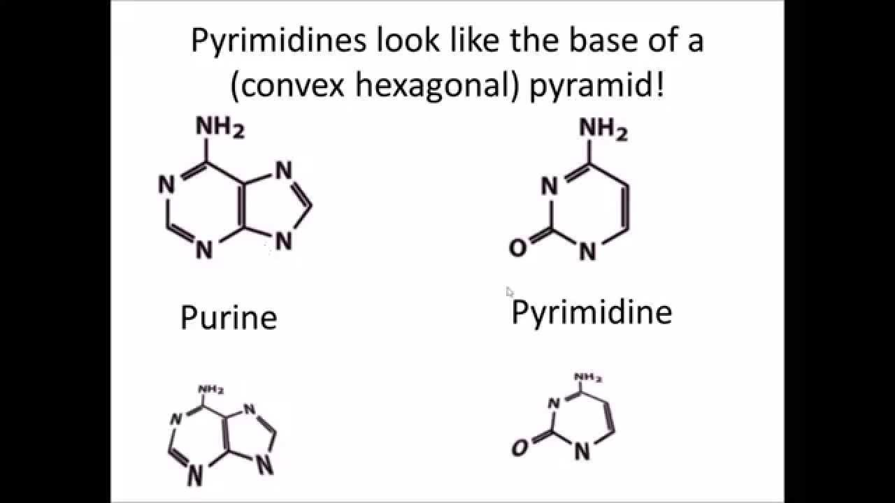 diagram of nucleoside [ 1280 x 720 Pixel ]