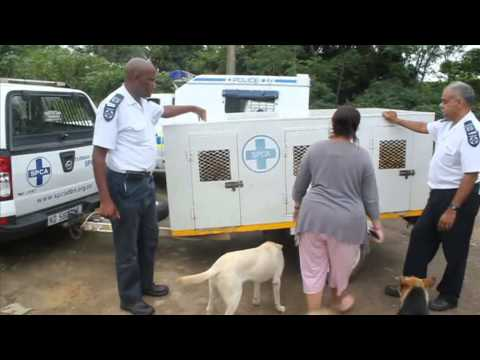 SPCA raids property - 30 Dogs Confiscated