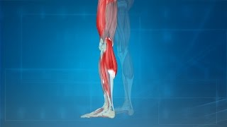 Cramps Treatment Causes Prevention