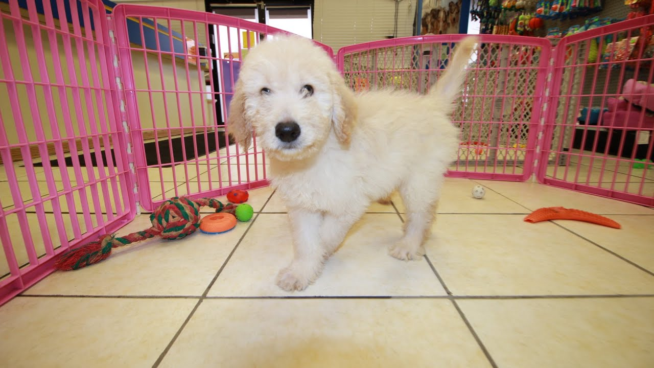 Not PuppyFind Craigslist Oodle Kijiji Hoobly eBay Marketplace