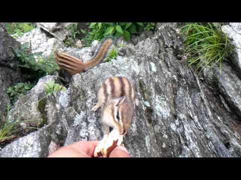 작년 초가을 치악산 다람쥐