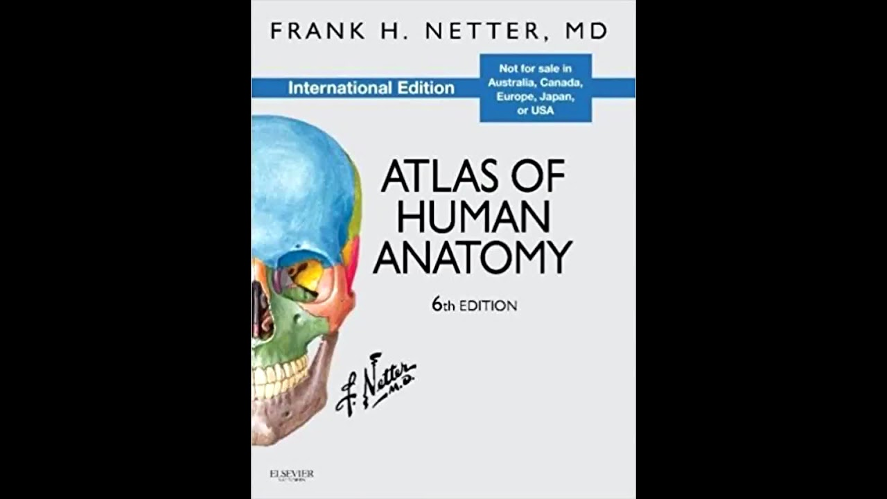 Netters Atlas Of Human Anatomy Free Download Youtube