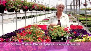 Fred Meyer -- Planting Your Hanging Basket
