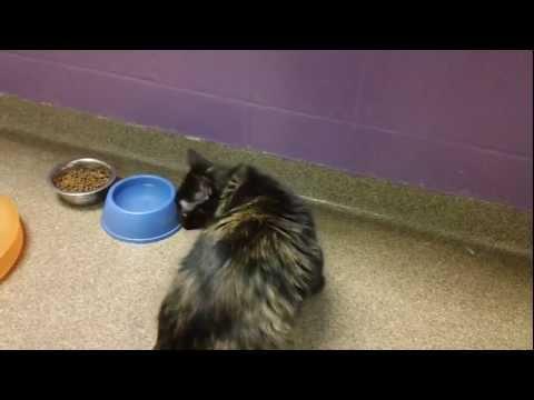 Lily - a pretty tortoiseshell cat