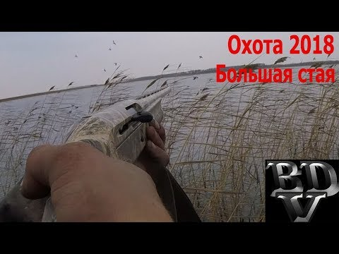Охота 2018 (Большая стая гоголей)