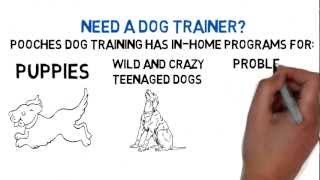 Dog Obedience Training Somerset Nj - Free Consult - 800-906-1560