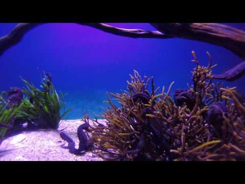 Two Oceans Aquarium 8