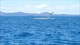 Baleines Rand'eau - début de saison 2014 - Nosy Be, Madagascar