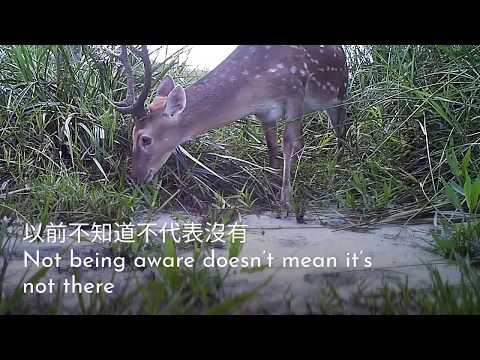 龍崎牛埔的自然環境生態美景   2018 台北國際雙年展 完整版