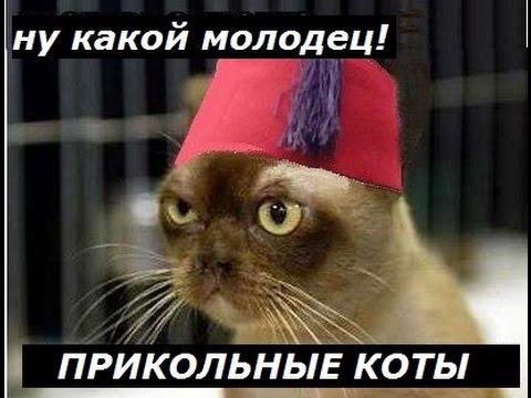умный фото кот