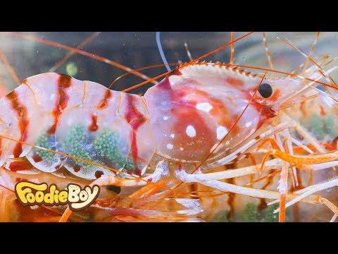 Dokdo Dohwa Shrimp / Dokdo Kkotsaeu, Busan Korea / Korean Street Food / 독도 도화새우 / 부산 부평동 독도꽃새우