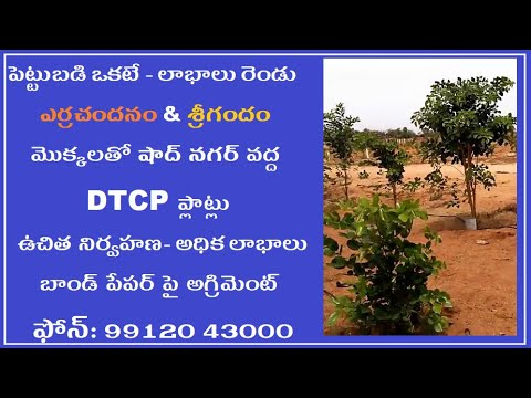 Red Sandal Plantation Plots near Yadagirigutta 9912043000