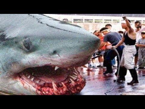 Download 9 maiores tubarões já capturados pelo homem