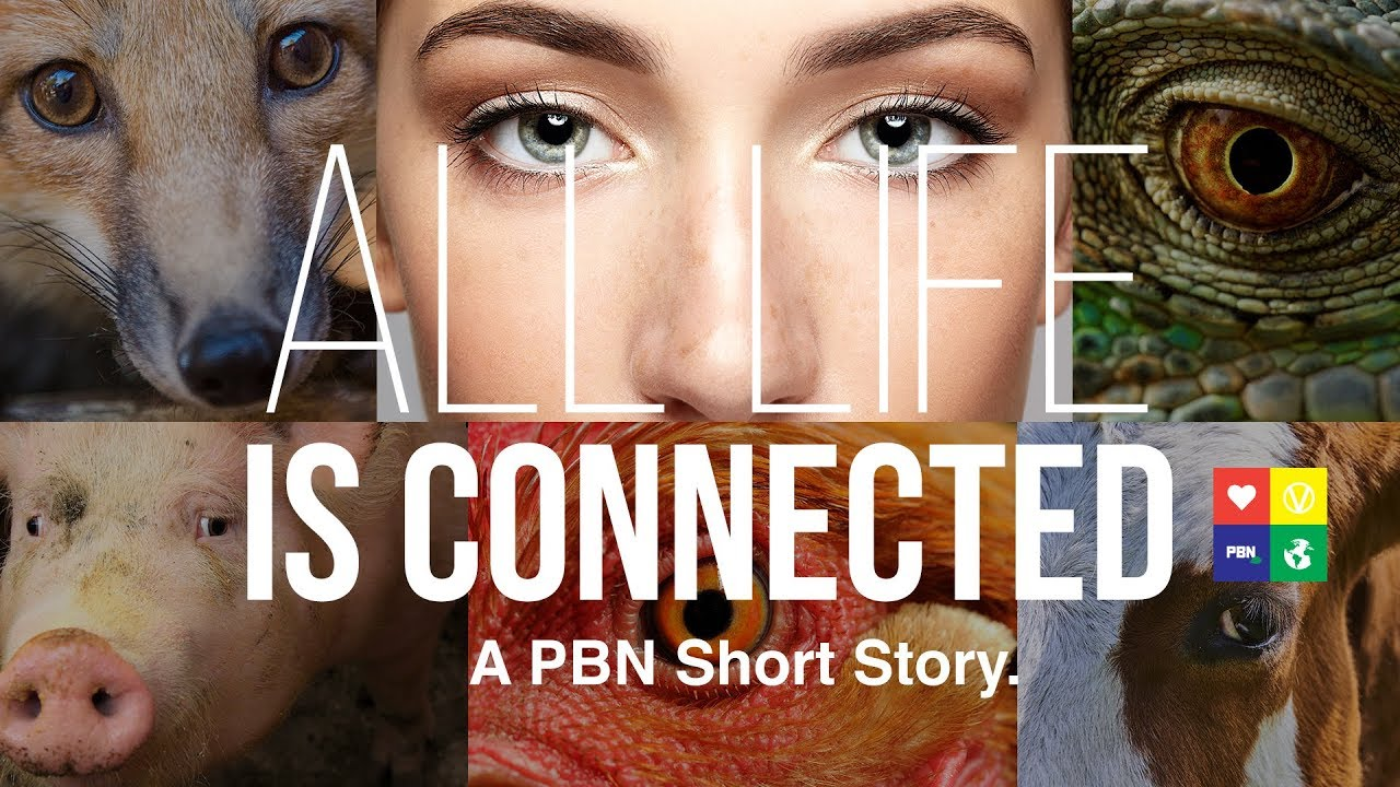 All LIFE is Connected: A PBN Short Story